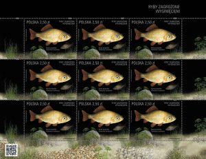 Ryby zagrozone karas arkusik