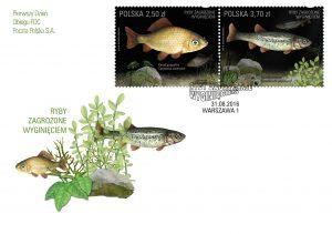 Ryby zagrozone karas strzebla koperta popr